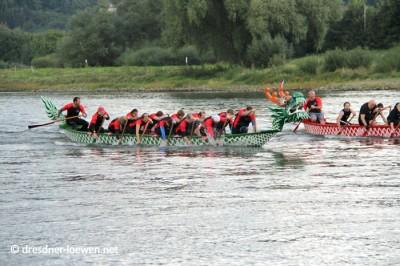 Drachenboot Rennen auf der Elbe zum Inselfest
